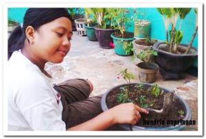 Aktifitas penghijauan di pekarangan rumah (dokumentasi pribadi)
